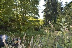 Grundstück unterhalb des Friedhofs