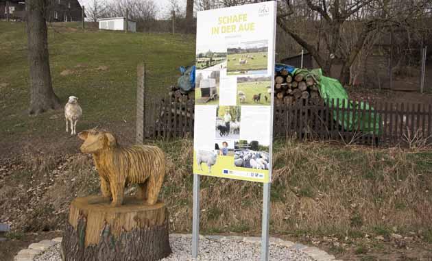 Schaf aus Holz und in Natura in Neuenplos