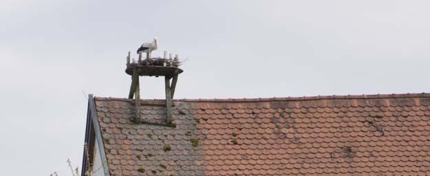Storch in Heinersreuth