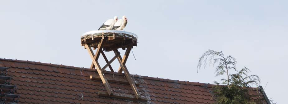Meister Adebar im neuen Nest