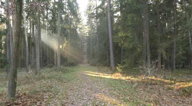 der Wald in Heienrsreuth