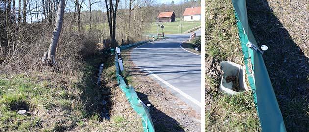 Aphibienschutz in Cottenbach
