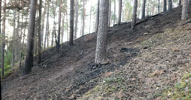 Waldbrand bei Theta