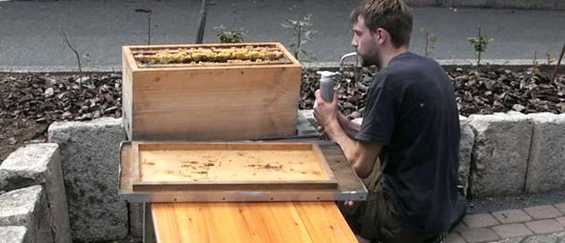 Bienen in Heinersreuth